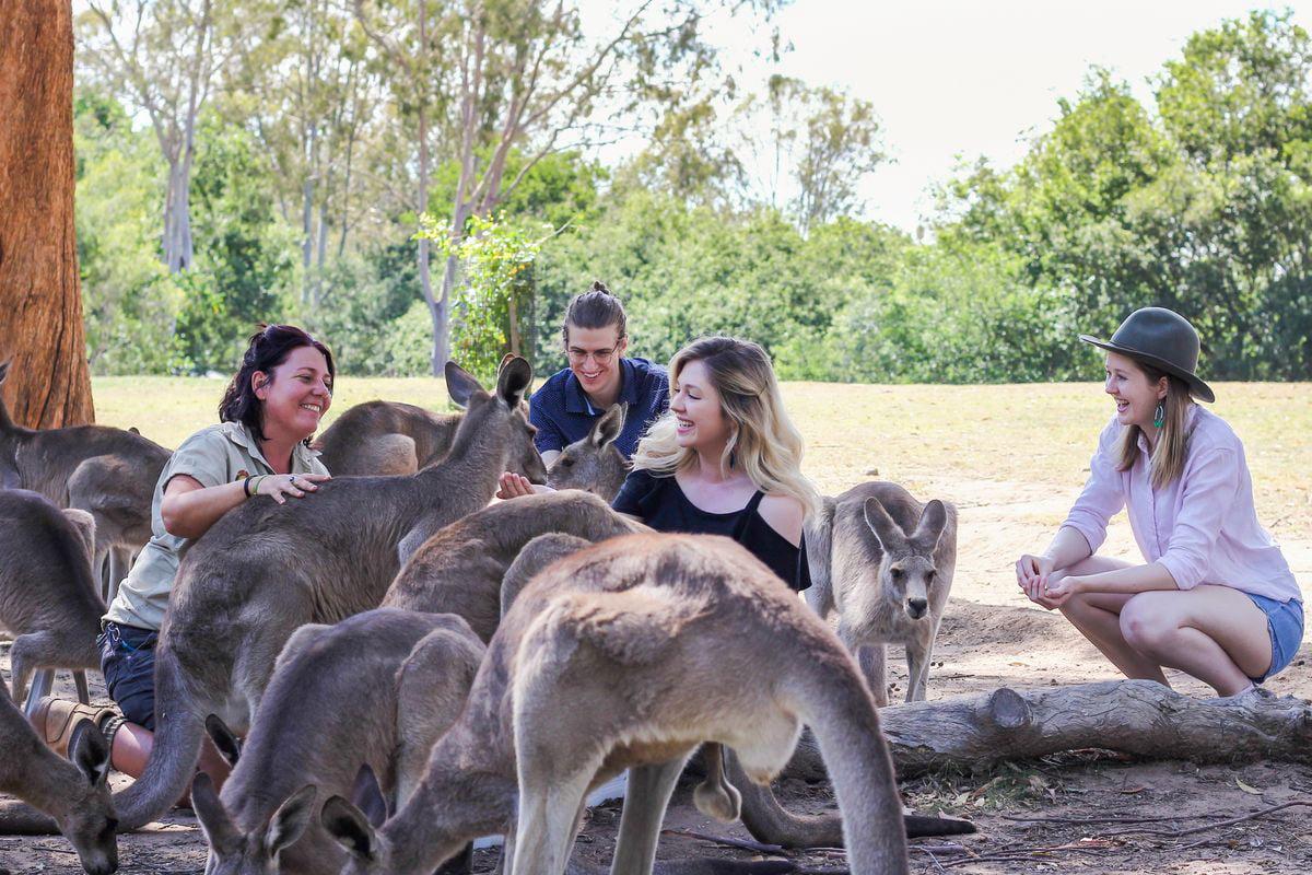 kangaroo encounter